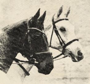 Pferde-Geschichten